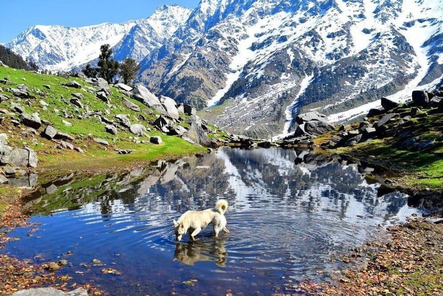 MCLEODGANJ VOLVO PACKAGE (2 Nights /3 Days) - Tour
