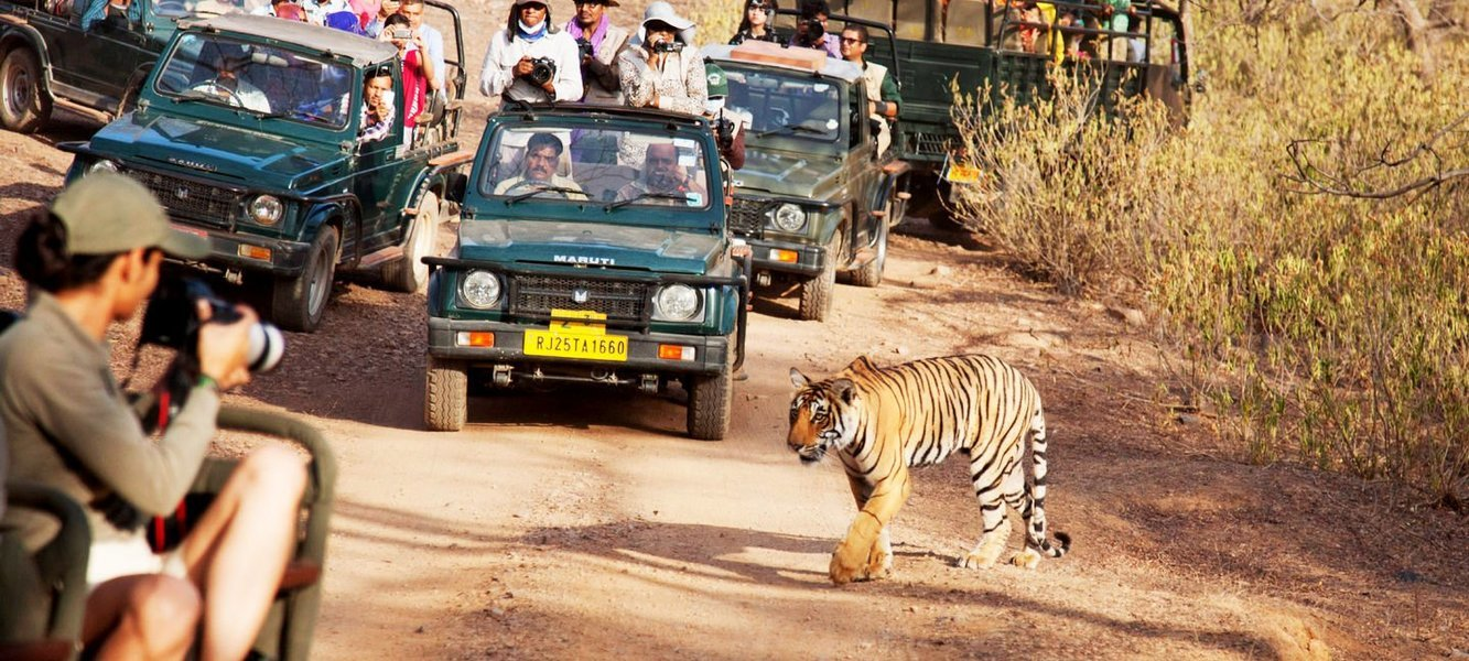 Jaipur to Ranthambore Tiger Park - Day Tour - Tour