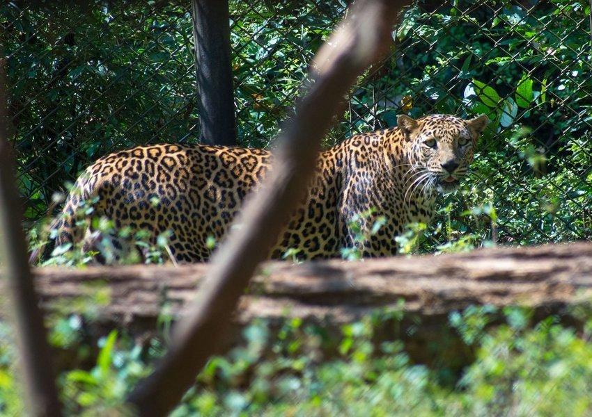 Bondla Wildlife Sanctuary Tour - Tour