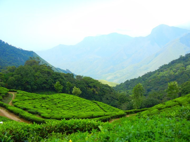 Munnar & Alleppey Package - Tour