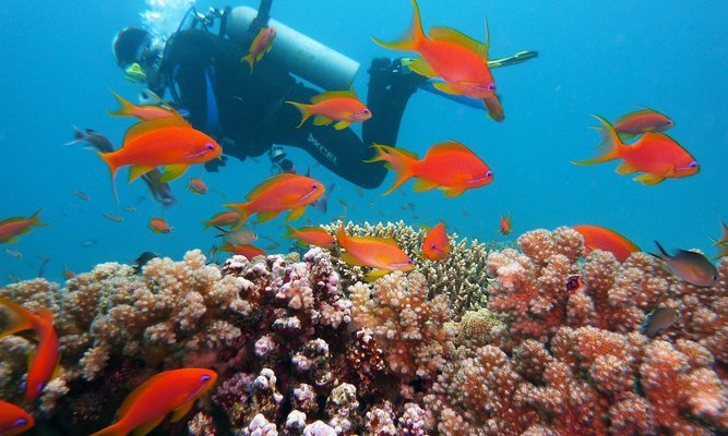 Scuba Diving at Malvan - Tour