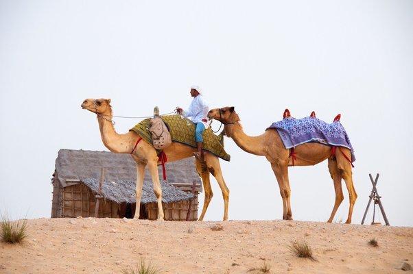 Miracles of Dubai - Tour