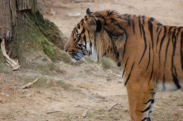 Sariska Tiger Reserve Safari & Stay Call us 7017584983 - Tour