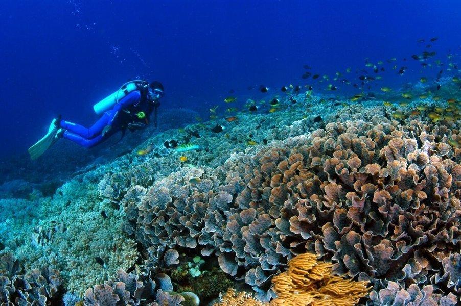Discover Scuba Dive at Tulamben with Bali Hai - Tour
