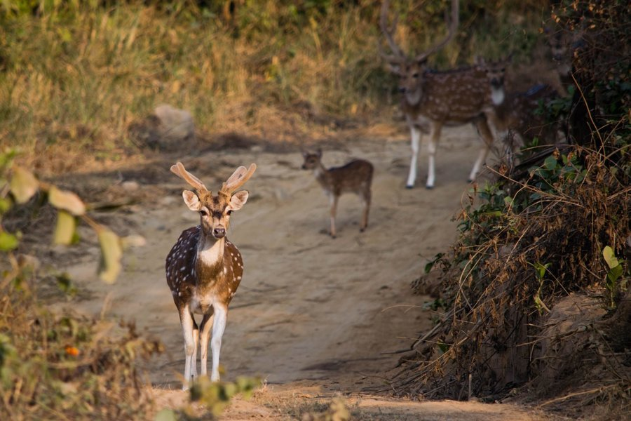 Corbett - Wildlife Safari - Tour