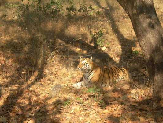 Central India The Call Of The Tiger - Tour