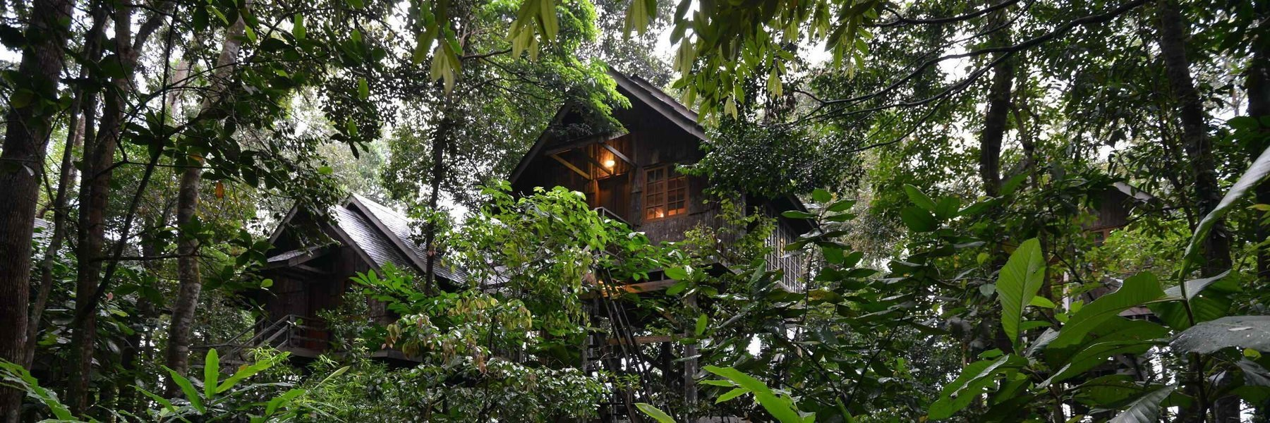 Explore Kuching and Permai Rainforest - Tour