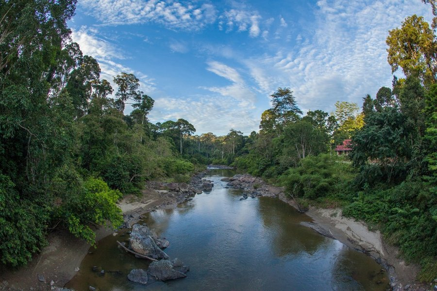 Cycling In Malay Kampongs and Danum Valley - Tour