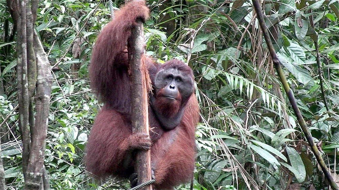 Enchanting Kuching, Wildlife and Caves - Tour