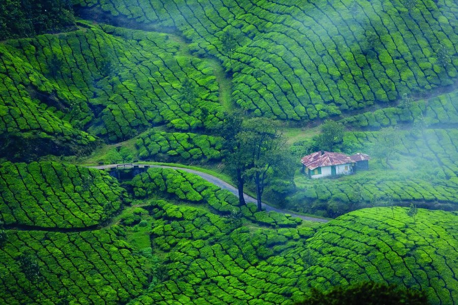 Best of Kerala Tour  (Tour 20) - Tour