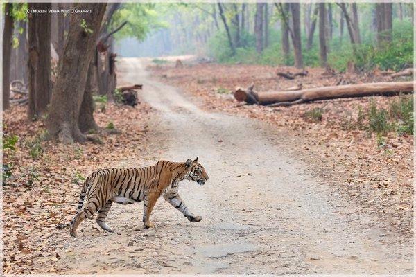 Tiger Tour Package - Tour