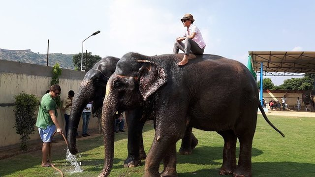 elephant experience farm - Collection