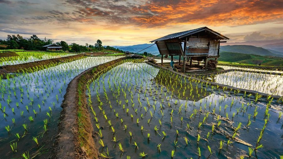 Superb Bangkok And Beautiful Chiang Mai - Tour