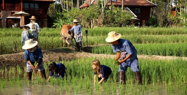 Family And Fun Tours Of Thailand - Collection
