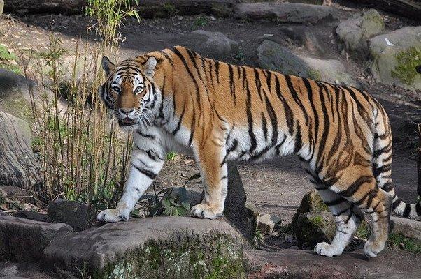 Kanha Tiger Reserve - Tour