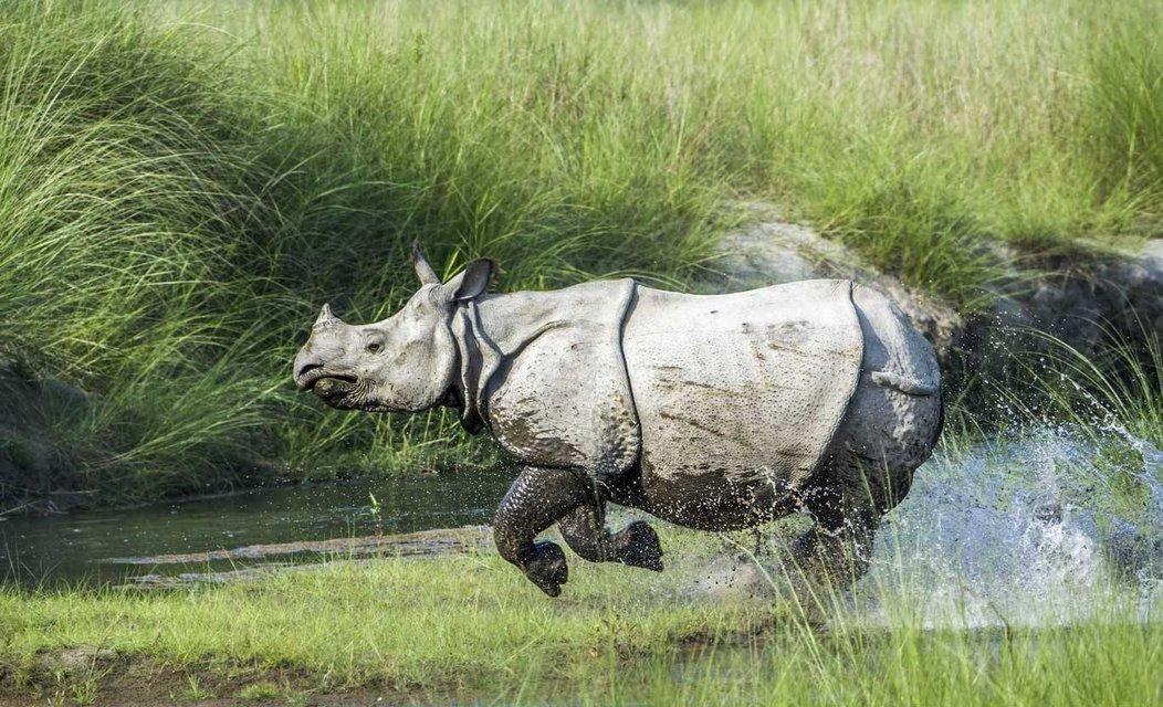 Kaziranga National Park + Majuli Island Tour - Tour