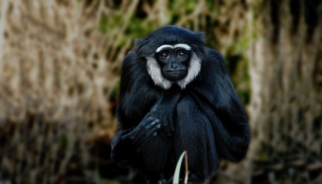Wildlife and Birding Tours - Collection