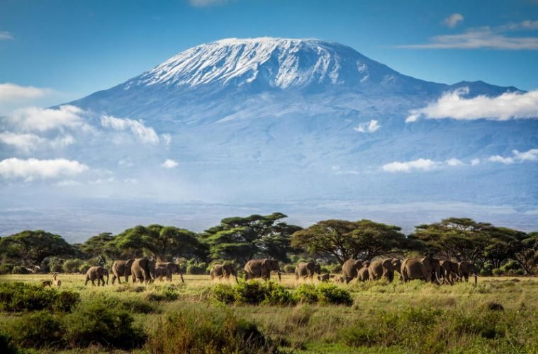 Mount Kilimanjaro - Climbing to Africa's Rooftop! - Tour
