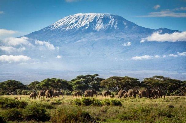 Mount Kilimanjaro - Climbing to Africa's Rooftop! - Tour
