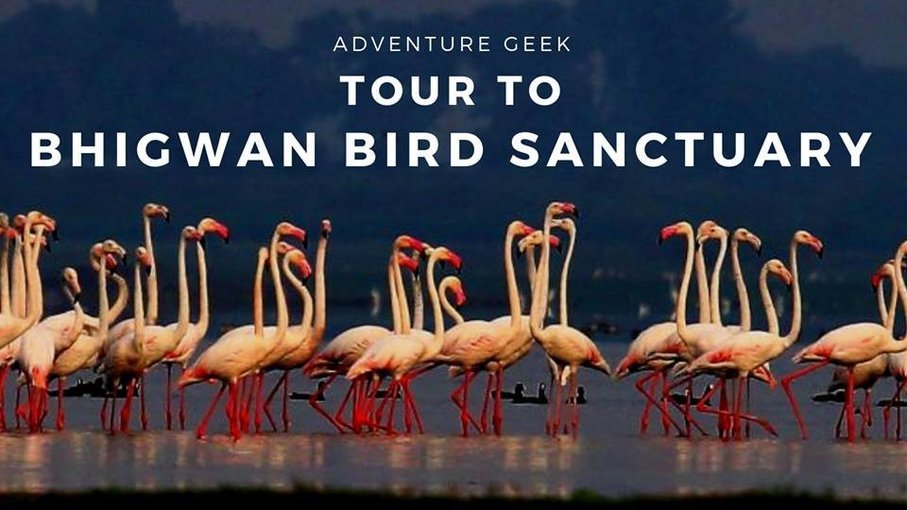 Tour to Bhigwan Bird Sanctuary - Tour