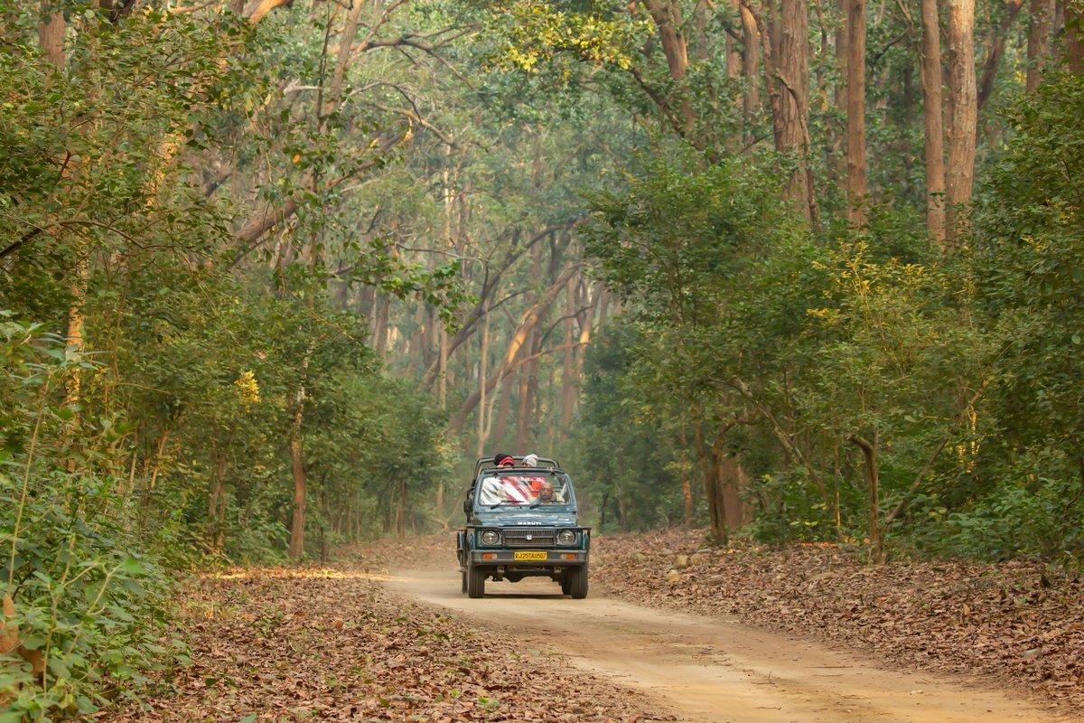 Jungle Safaris - Collection