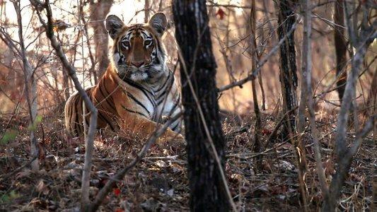 Tipeshwar Wildlife Safari