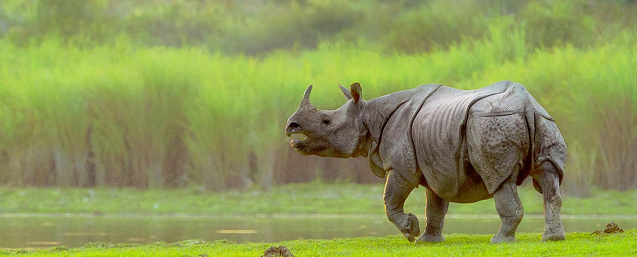 4 Nights 5 days Taxi Tour of Kaziranga National Park with Shillong and Cherrapunji - Tour