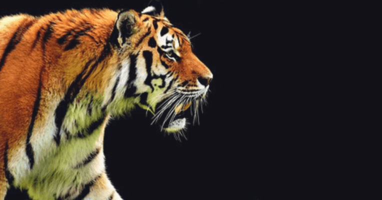 Tadoba Jungle Safari - The land of Tigers - Tour