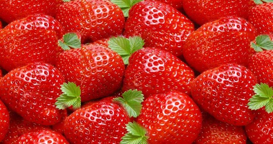 Strawberry Festival Tour - Tour