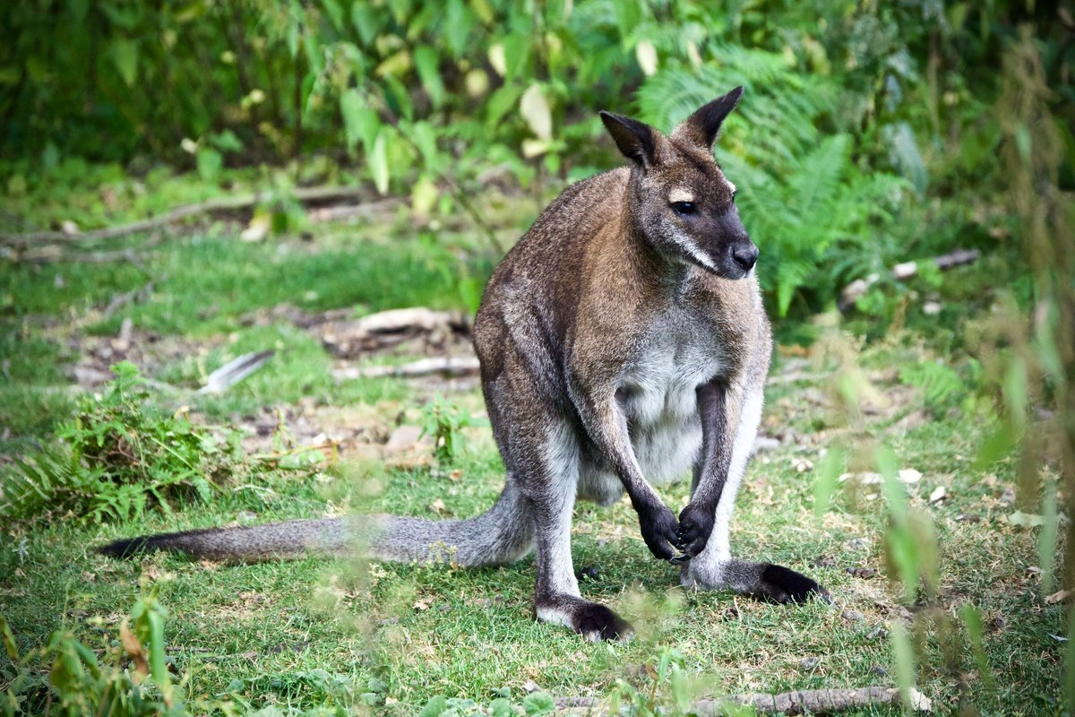 AUSTRALIA & NEW ZEALAND - Collection