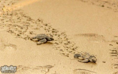 Velas Turtle Festival Tour From Pune