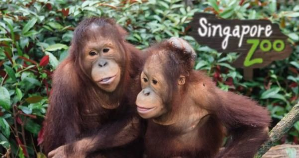 Singapore Zoo Ticket - Tour