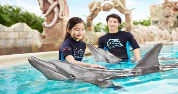 Dolphin Island Interaction Programs - Tour