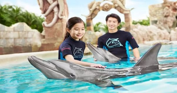 Dolphin Island Interaction Programs - Tour