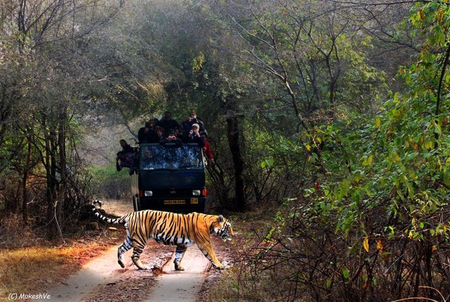 Ranthambore Safari Affordable Package - Collection