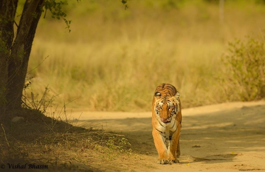 About Jim Corbett Park - Tour