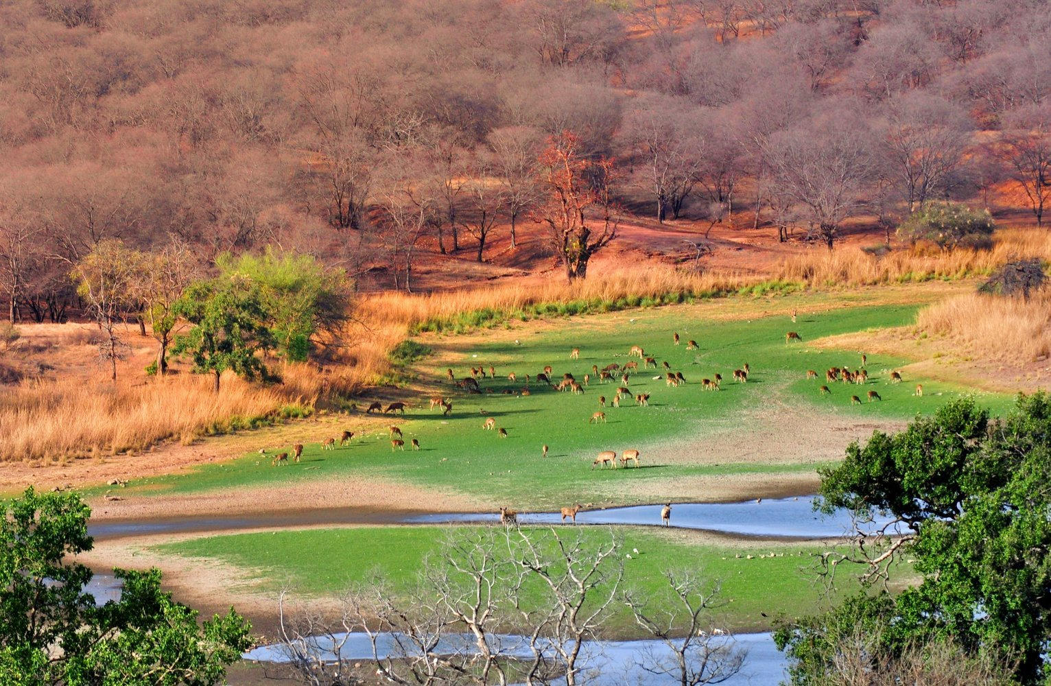 Ranthambore National Park Package