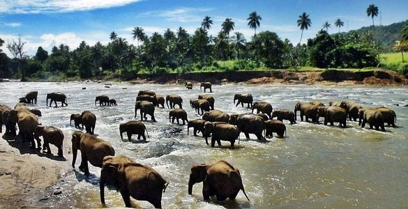 Sri Lanka Backpacking Tour