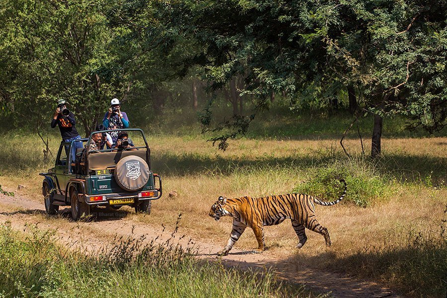 Ranthambore Luxury Package - Tour