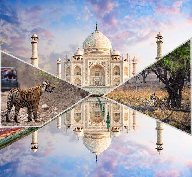 Taj Mahal & Ranthambore National Park Tour - Tour