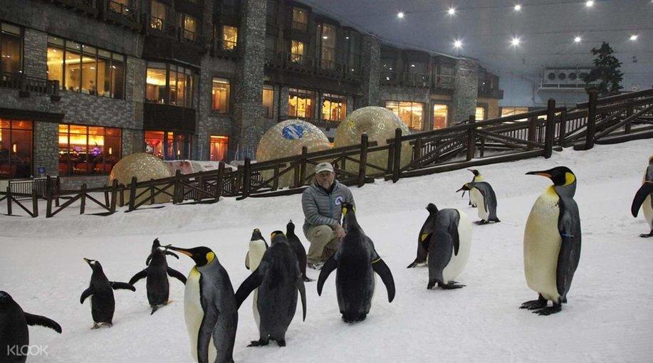 Snow Park Emirates mall - Tour