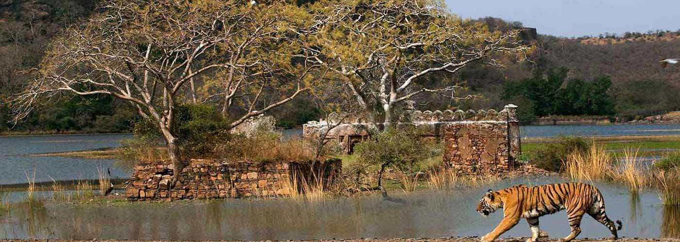 2 Nights Ranthambore Packages - Collection