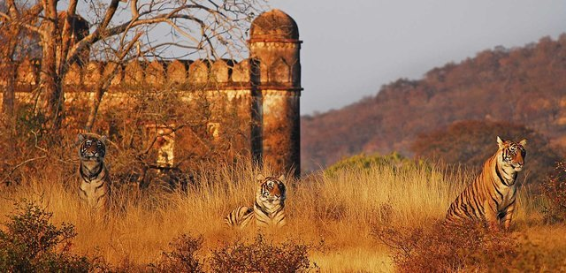 3 Nights Ranthambore Packages - Collection