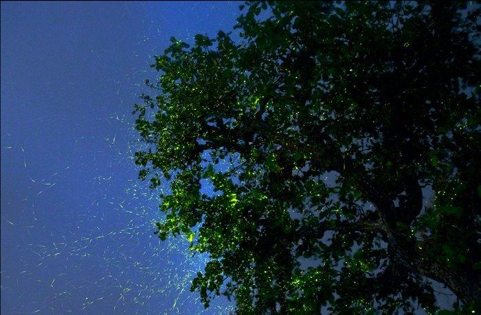 VRangers Fireflies special trek to Prabal Machi & Camping - Tour