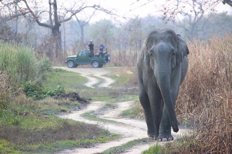 Guwahati to Kaziranga National Park (kohora) one way transfer - Tour