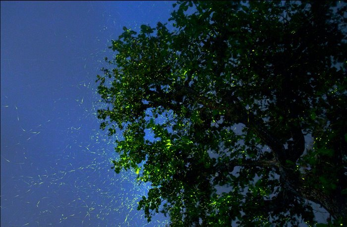 Vrangers Fireflies Special Trek to Bhekre Village - Tour