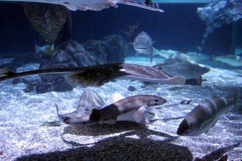 Sea Life Aquarium Ticket in Istanbul - Tour
