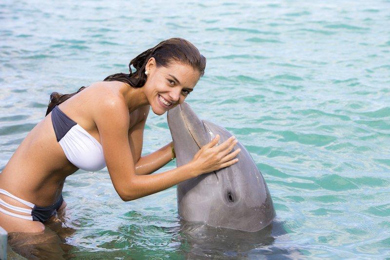 Dolphin Island - Tour