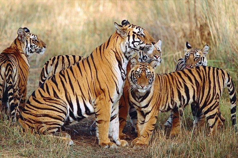 Pench National Park Wildlife Safari Tour - Tour