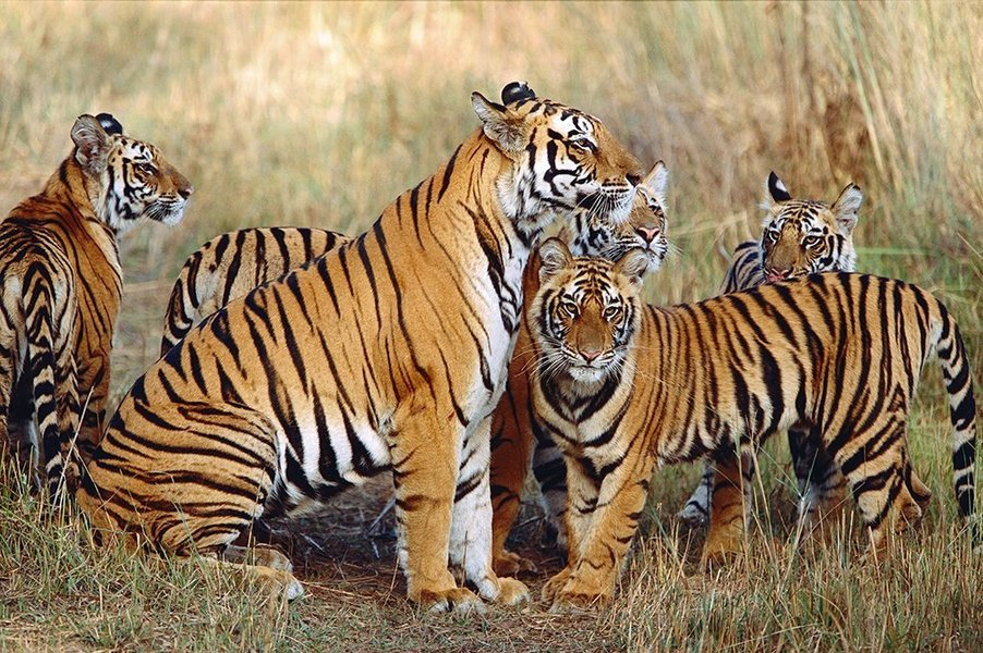 Pench National Park Wildlife Safari Tour - Tour